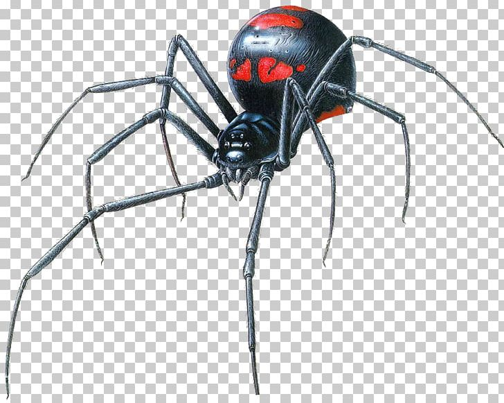 Southern Black Widow Spider Drawing Brown Widow PNG, Clipart.