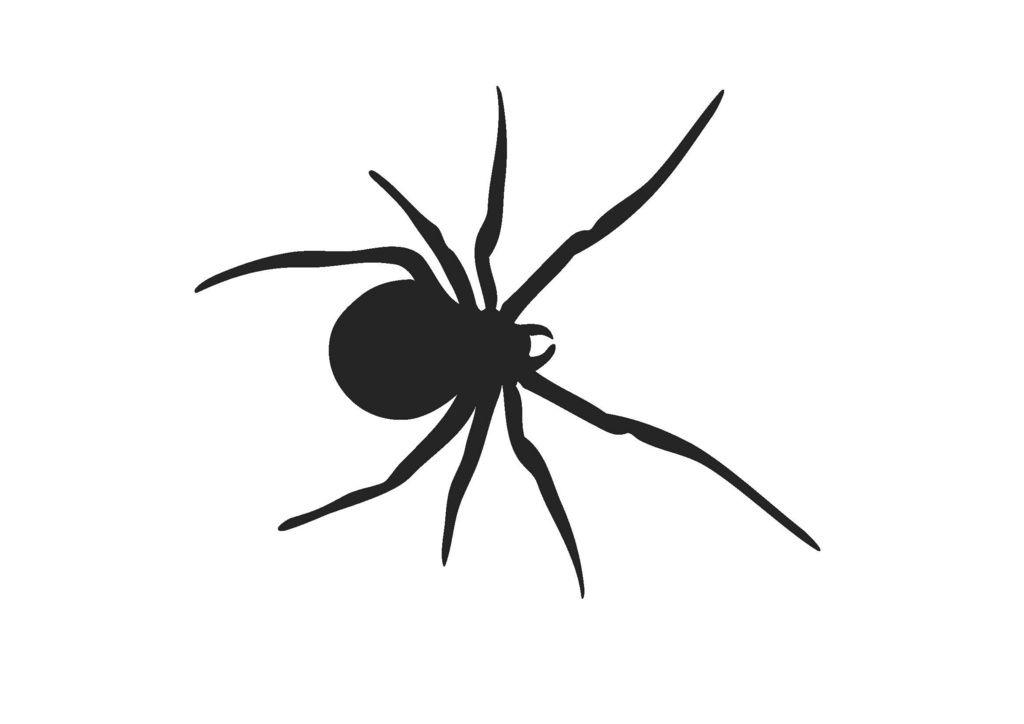 SPIDER,SILHOUETTE by Black Widow Fireworks Pty Ltd.