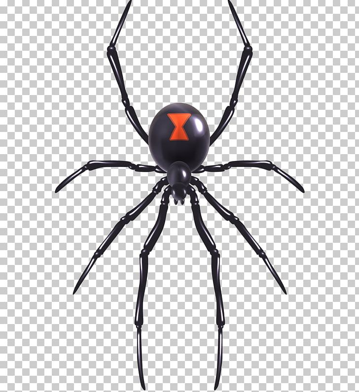 Spider Web Southern Black Widow Illustration PNG, Clipart.