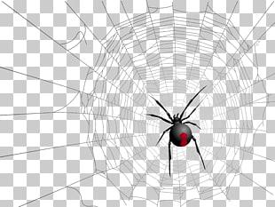 Widow spiders Halloween Spider web, Spider web spider PNG.
