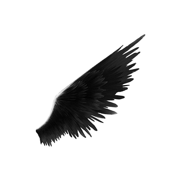Download Black Wings Png () png images.