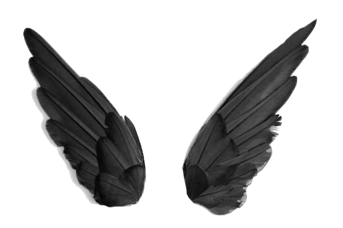 Download Free png Black wings PNG, Download PNG image with.
