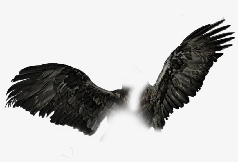 Dark Wings Png Black Wings Pngs.