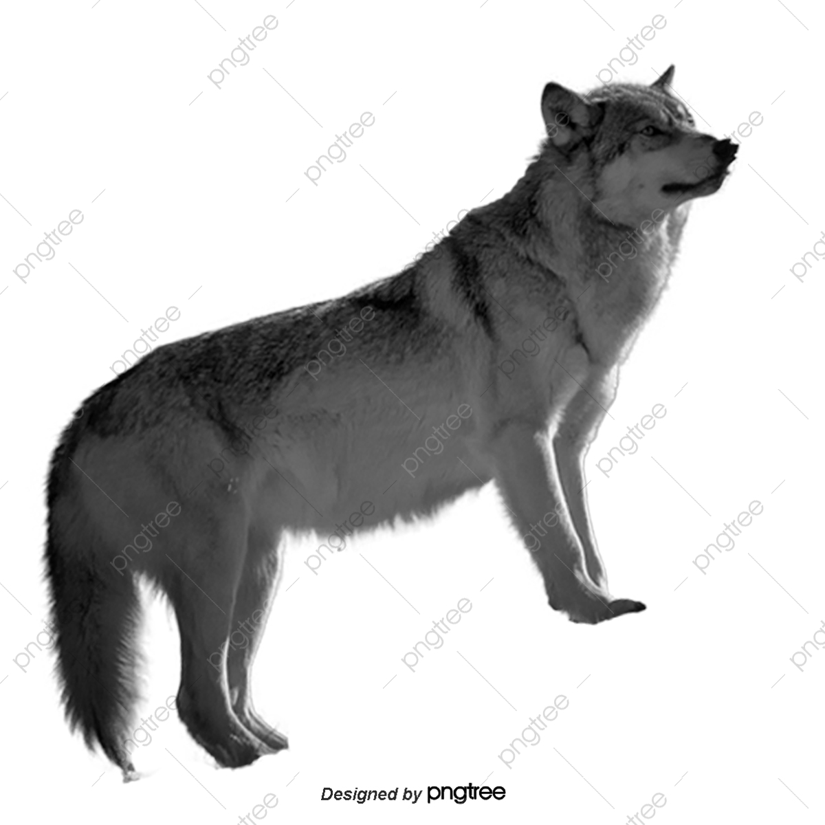 Black Wolf, Hand Painted Cartoon, Black, Wolf PNG Transparent.