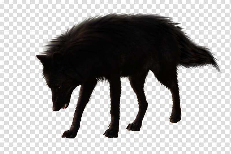 BlackWolf, black wolf standing transparent background PNG clipart.