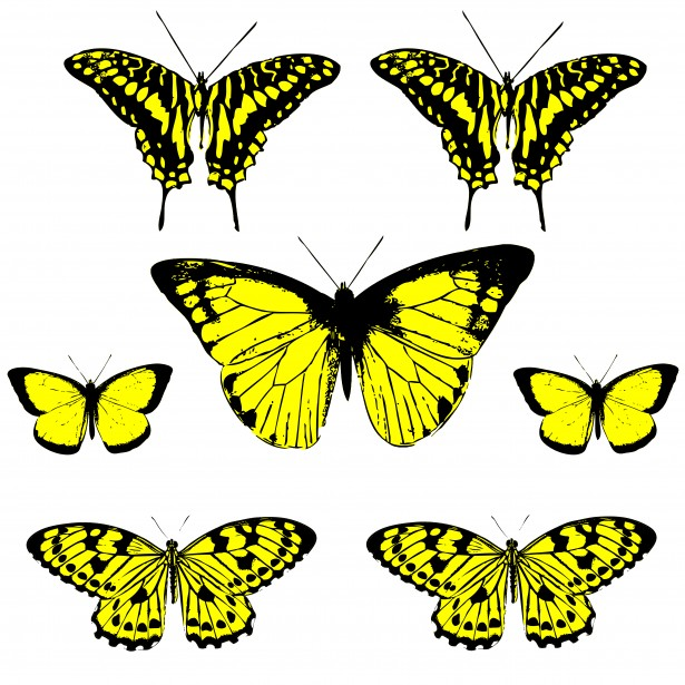 Yellow And Black Butterfly Clipart.