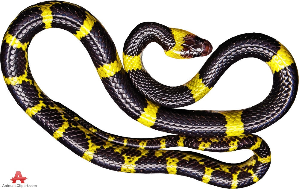 Black Snake with Yellow Stripes Traced Clipart.