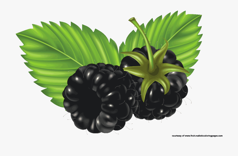 7 Awesome Blackberry Fruit Clipart.