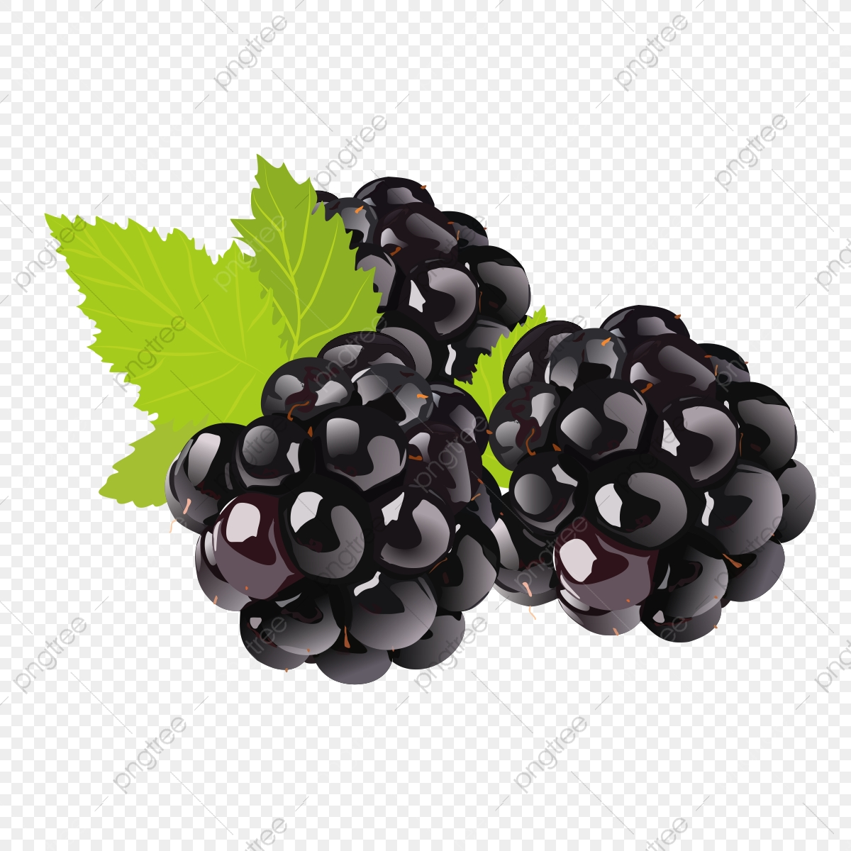 Fruit Drawing Clipart Blackberry, Fruit Logo, Set Clipart, Exquisite.