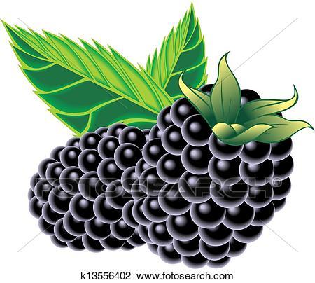 Blackberries Clipart.