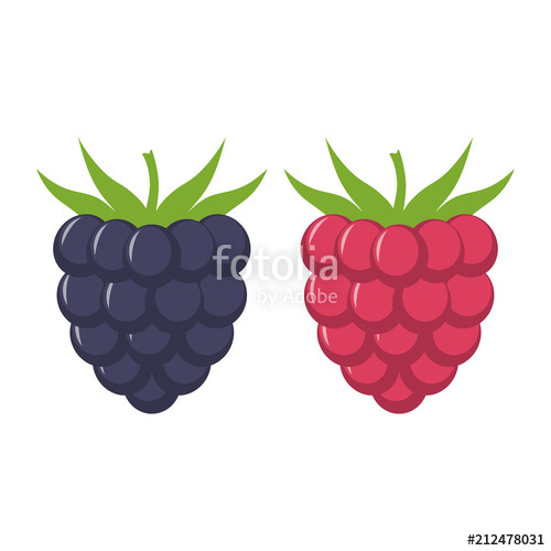 Blackberry and raspberry with leaves vector icon. Blackberry and.