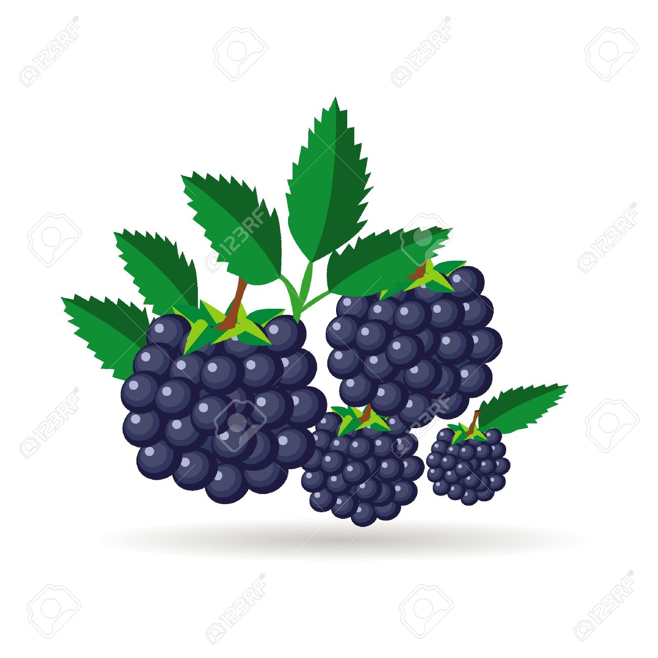 5,687 Blackberry Cliparts, Stock Vector And Royalty Free.