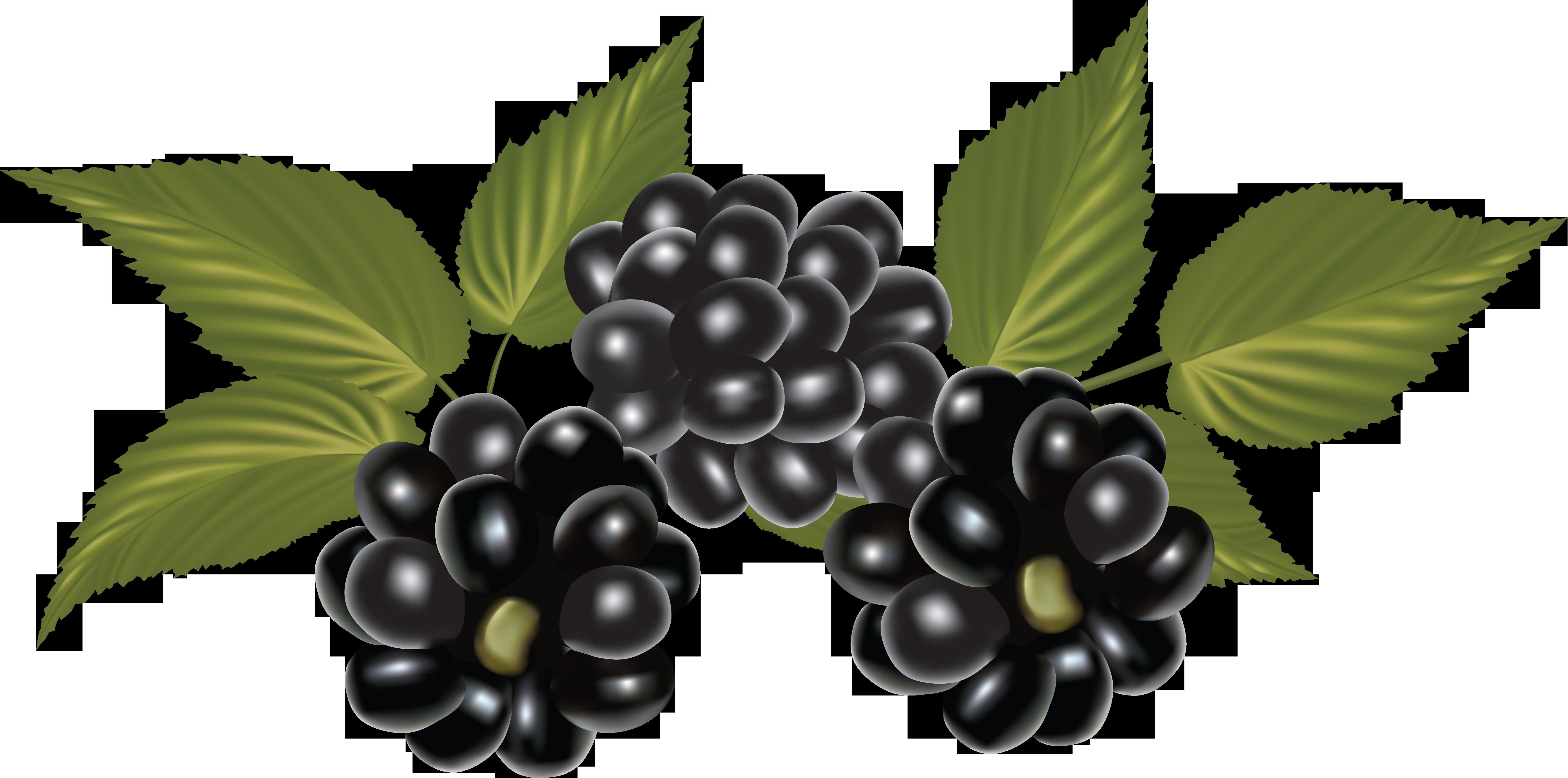 Blackberry, Clip Art, Blackberries, Rich Brunette.