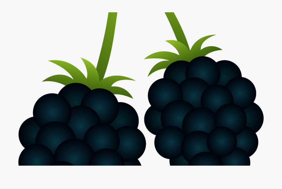 Berry Clipart Blackberry Bush Pencil And In Color Berry.