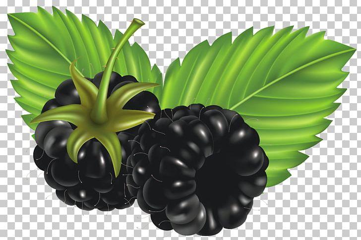Blackberry PNG, Clipart, Berry, Blackberries, Blackberry, Bramble.
