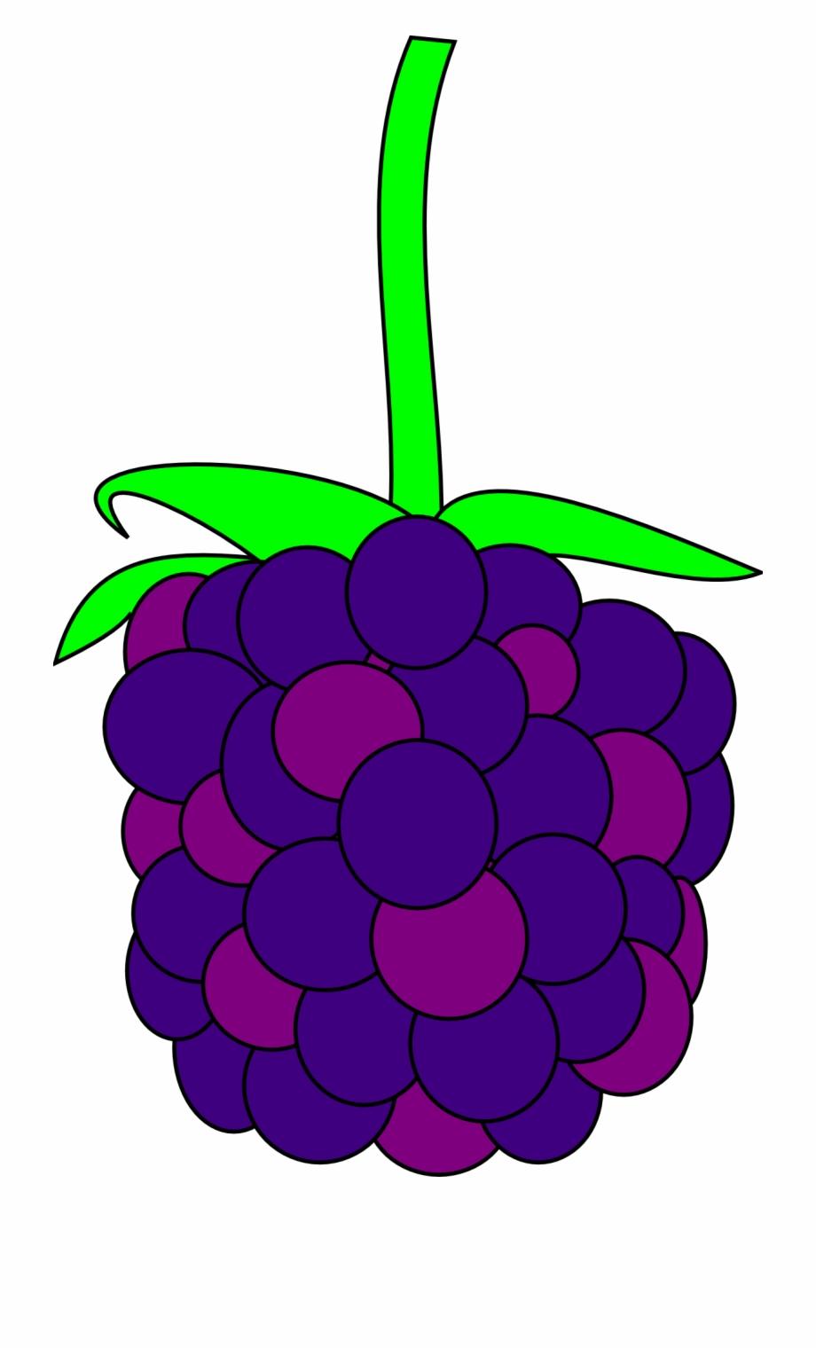 Blackberry Fruit Fresh Berry Design.