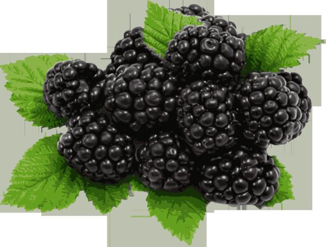 Clipart blackberry.