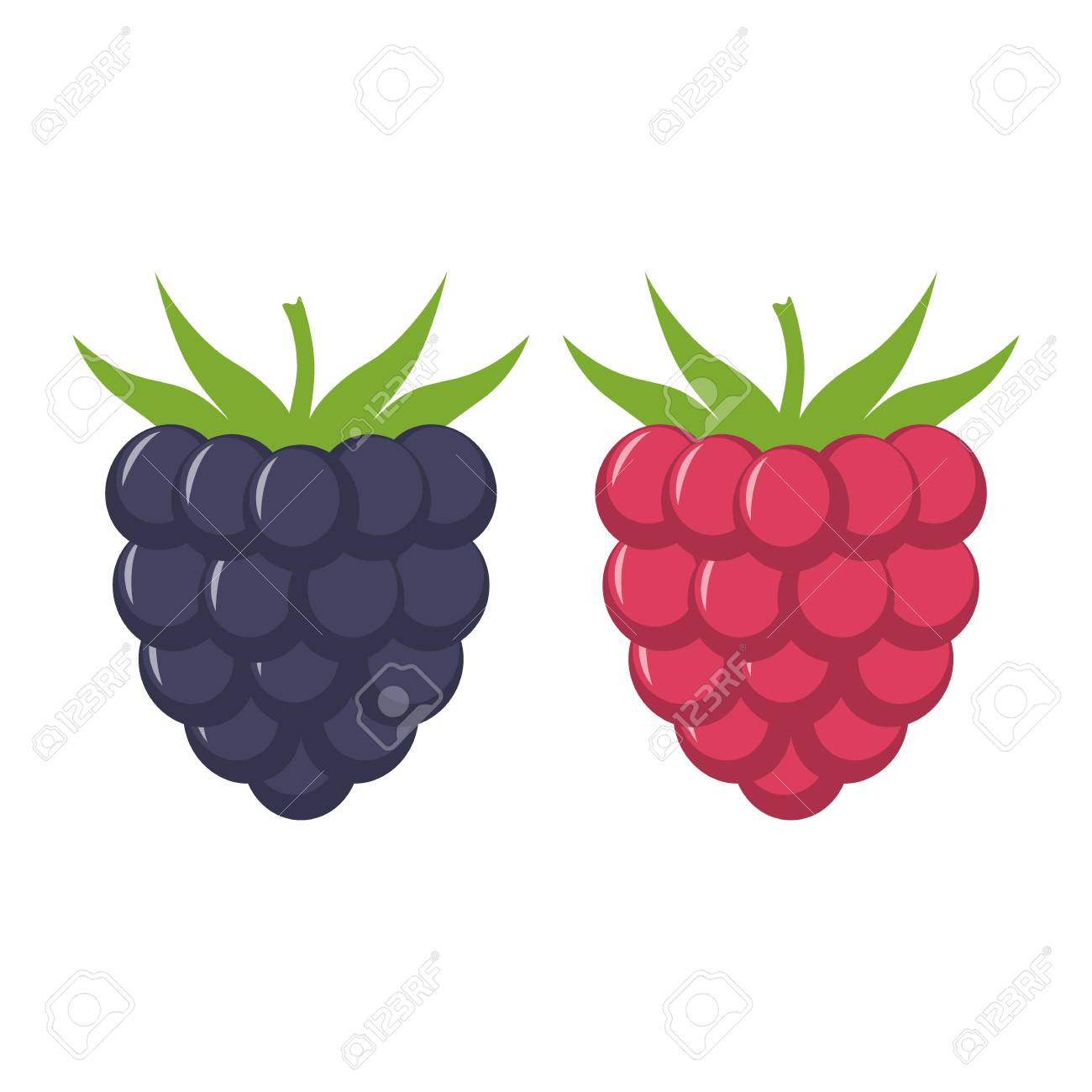 Blackberry and raspberry with leaves vector icon. Blackberry...