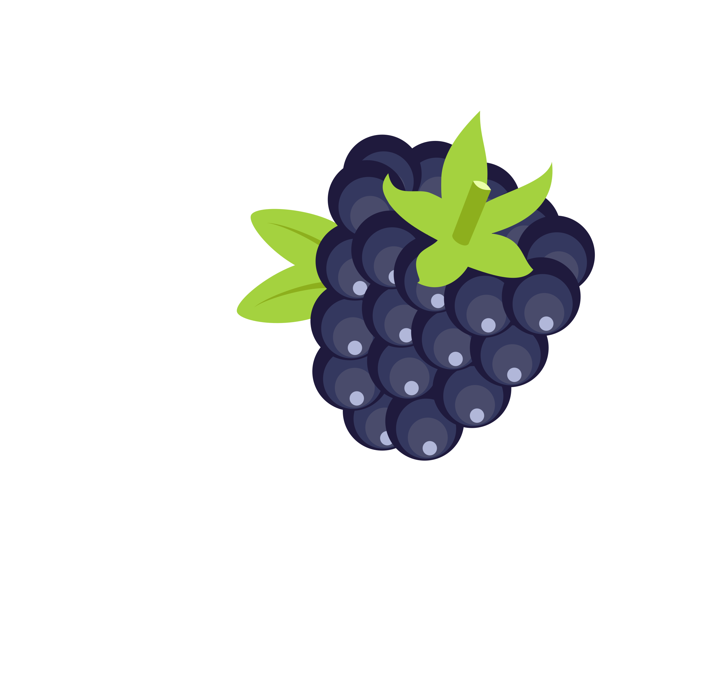 Blackberry vector clipart image.