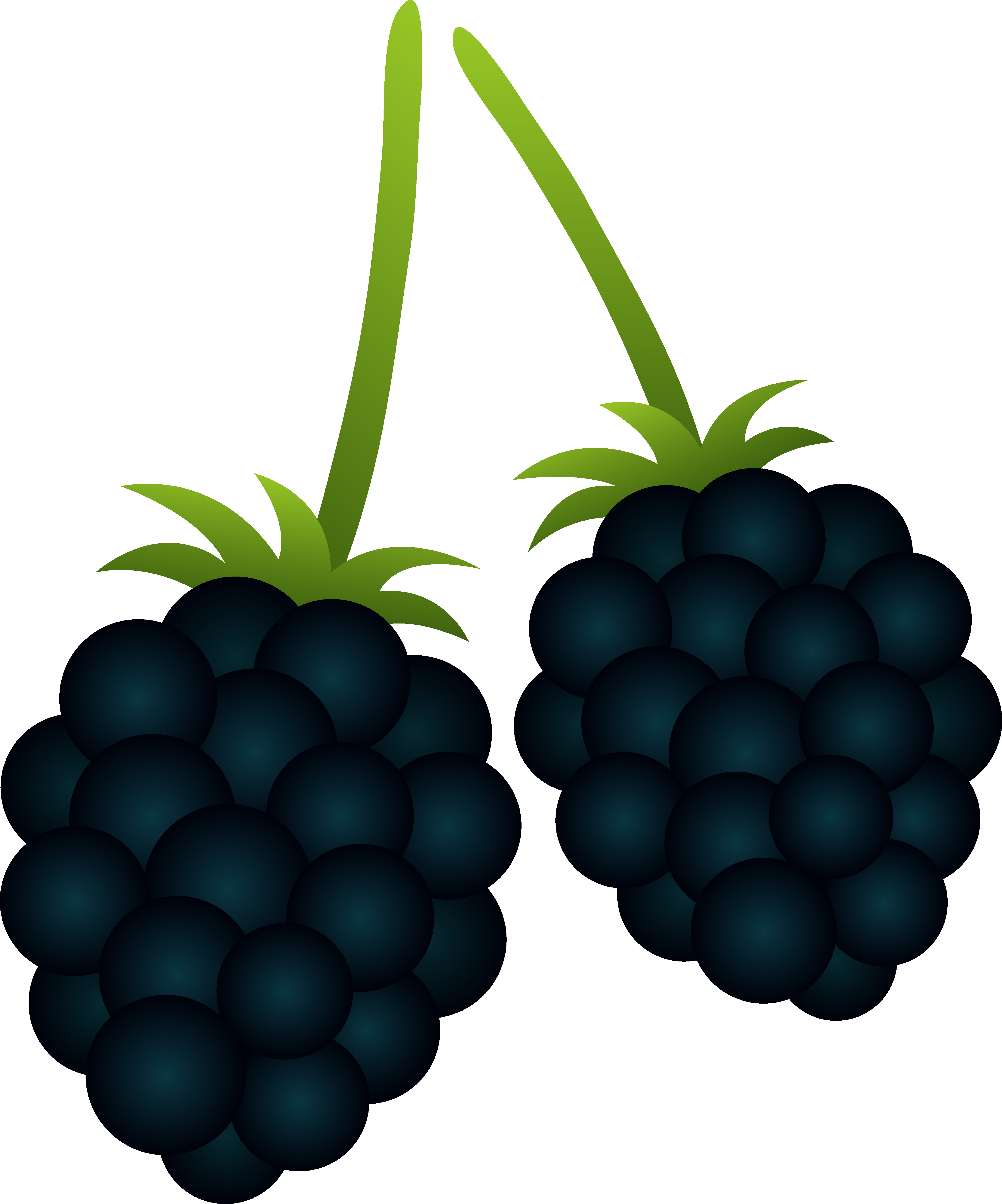 Free Free Blackberry Cliparts, Download Free Clip Art, Free.