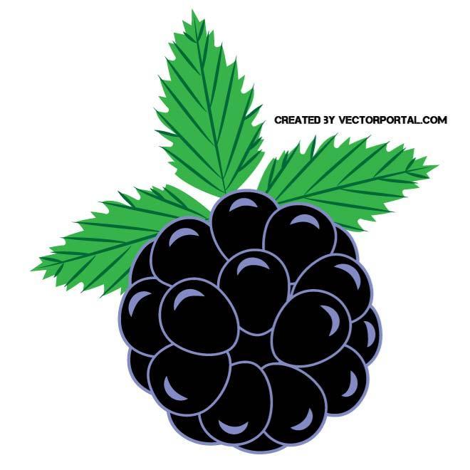 BLACKBERRY CLIP ART VECTOR.