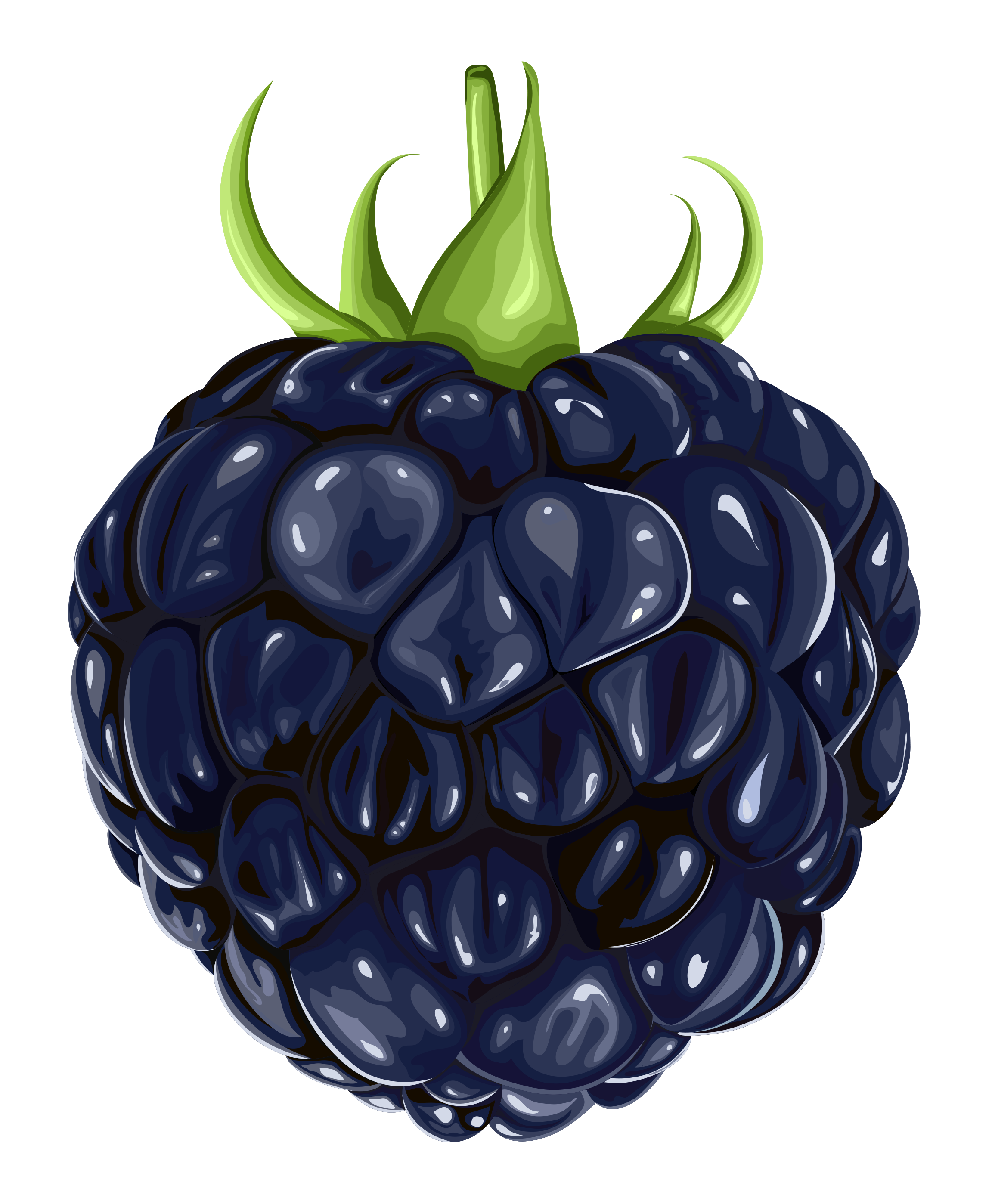 Free Blackberry Cliparts, Download Free Clip Art, Free Clip.