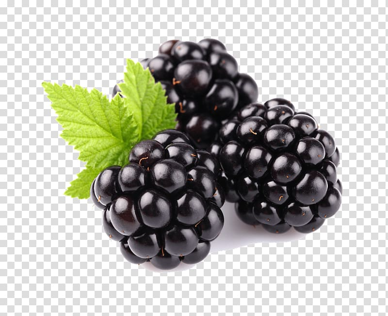 Blackberries transparent background PNG cliparts free.