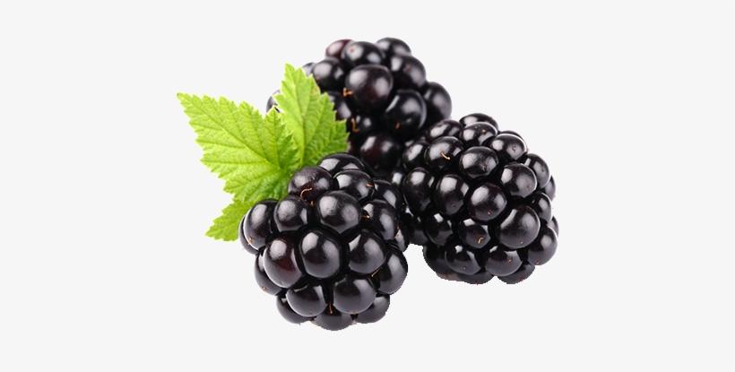Blackberry Fruit Png Clipart.