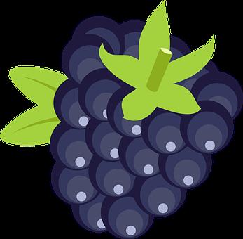10+ Free Blackberries & Blackberry Vectors.