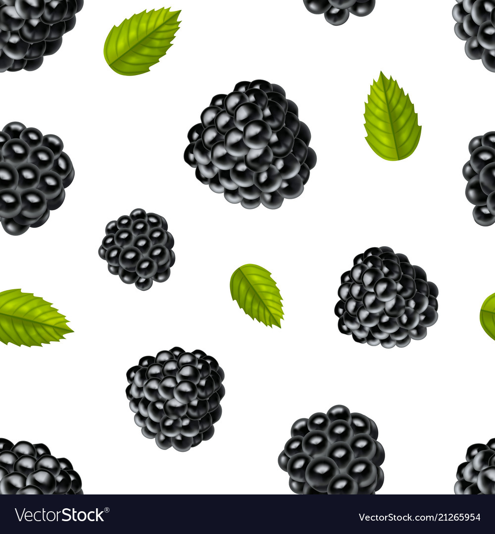 Realistic detailed 3d blackberries with green.