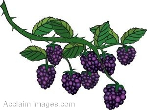 Clipart blackberry fruit.