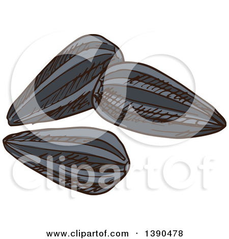 Clipart of Black and White Sketched Sunflower Seeds.