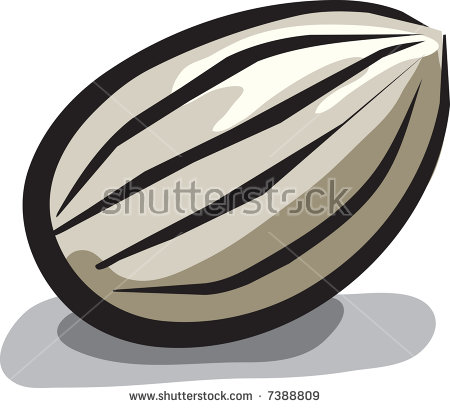 Sunflower Seed Stock Vector Illustration 7388809 : Shutterstock.