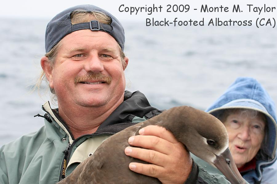 Seabird (Albatross, Shearwater, Petrel, & Storm.