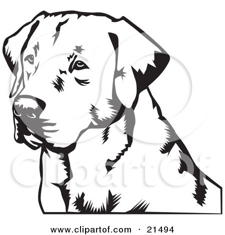 Labrador Retriever Dog\'s Face, Looking Off To The Left, On A.