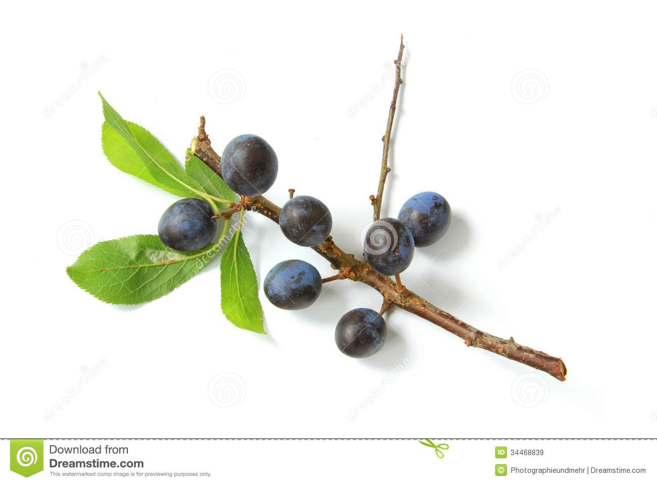 Sloes.