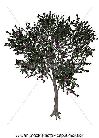Clip Art of Blackthorn or sloe tree.