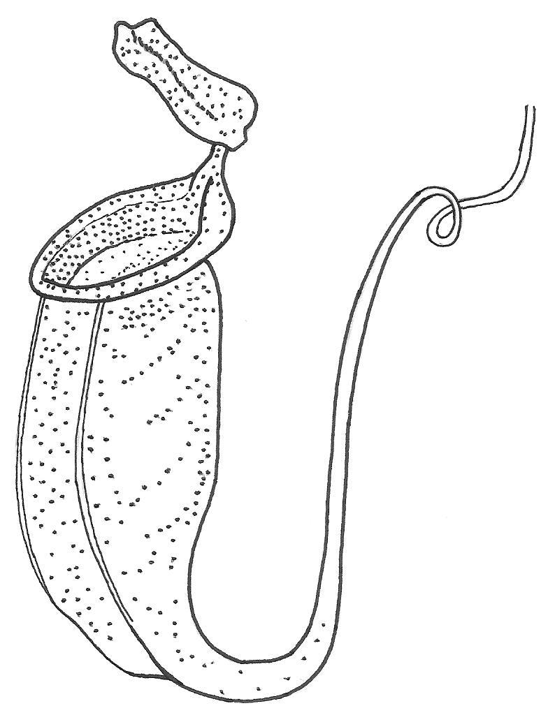 Carnivorous_Plants.