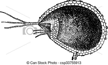 Vector Clip Art of Utricularia or bladderworts, cutting utricle.