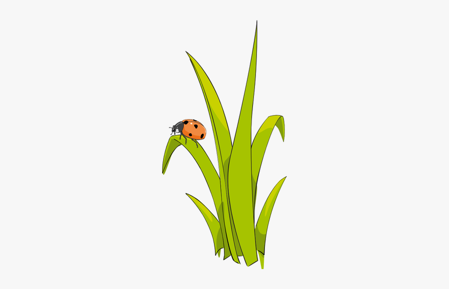 Ladybird On Grass.