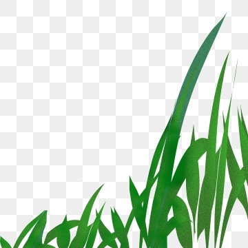 Blades Of Grass Png, Vector, PSD, and Clipart With Transparent.