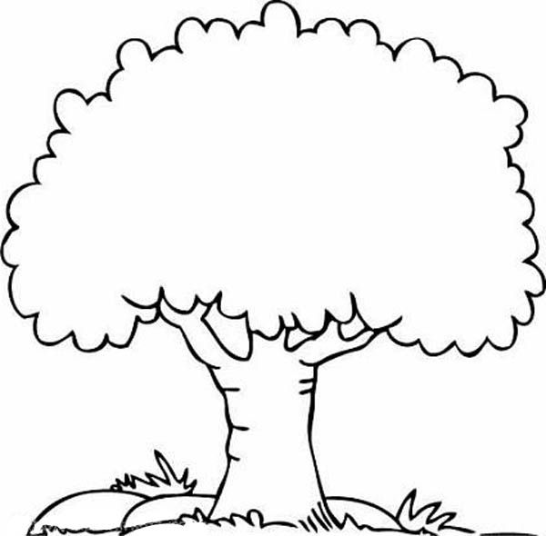 Tree Coloring Pages – Google Images.