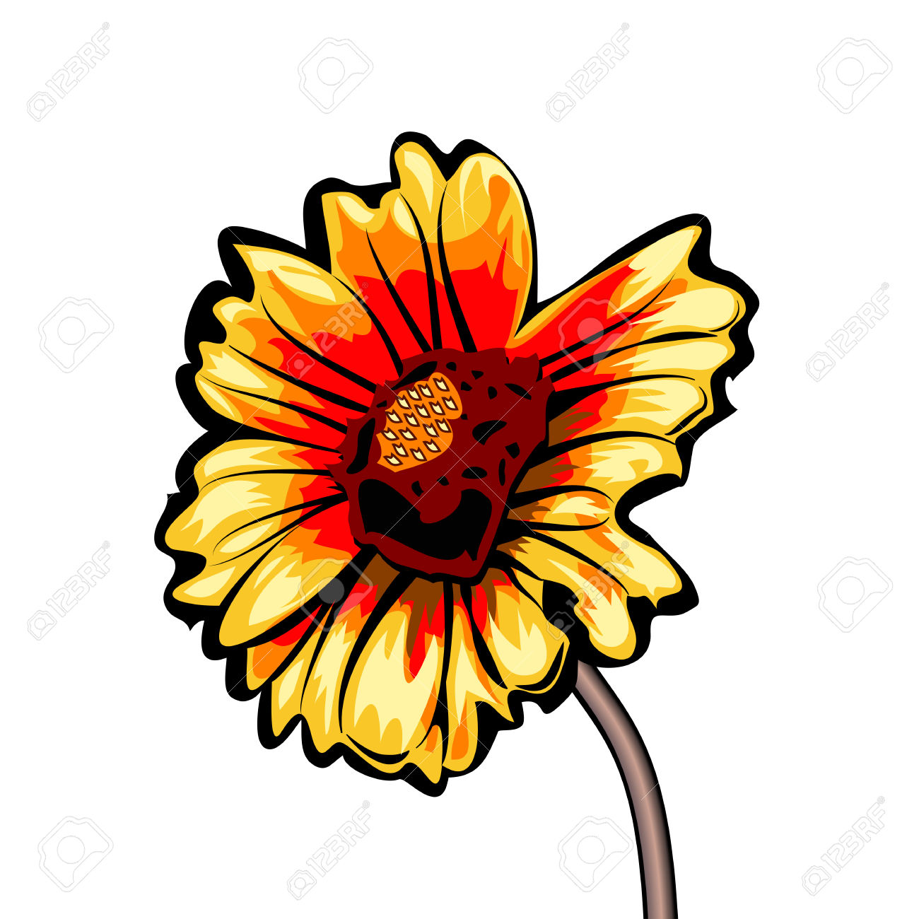 Gaillardia Orcommon Name Blanket Flower Is A Famous Flower Of.
