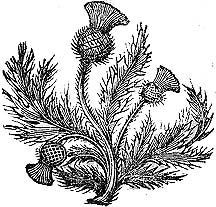 thistle design for embroidery @ Af 1/1/13.