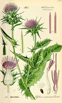 1000+ images about botanical art on Pinterest.