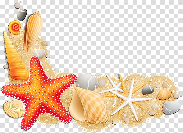 Seashell , seashell transparent background PNG clipart.
