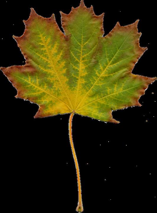 Kostenloses Foto: Blätter, Natur, Herbst, Clipart.