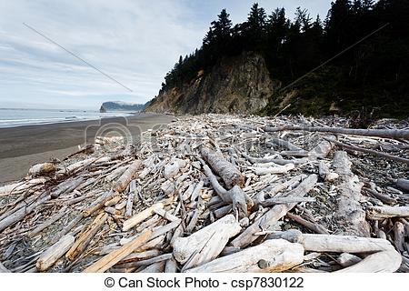 Pictures of Huge bleached driftwood tree on beach.