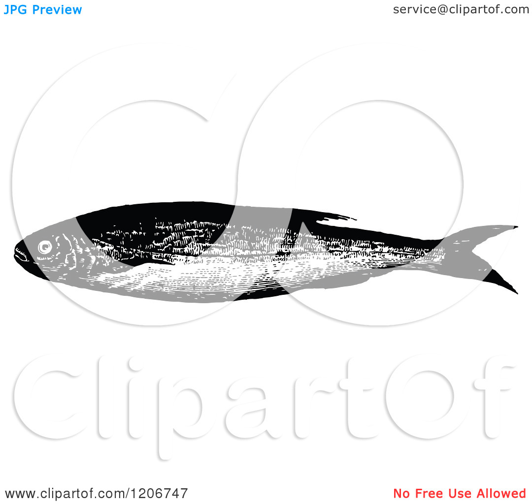 Clipart of a Vintage Black and White Bleak Fish.