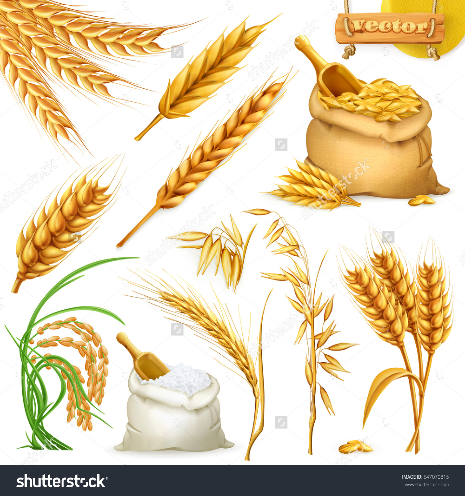 Wheat Barley Oat Rice Cereals 3d Stock.